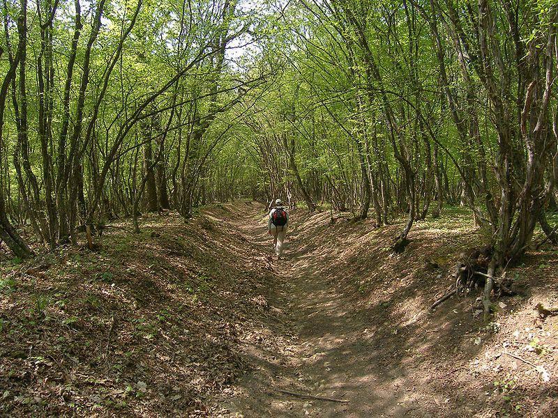 Shumen-forêt