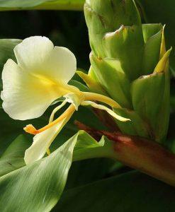 Plantes exotiques rares et de collection